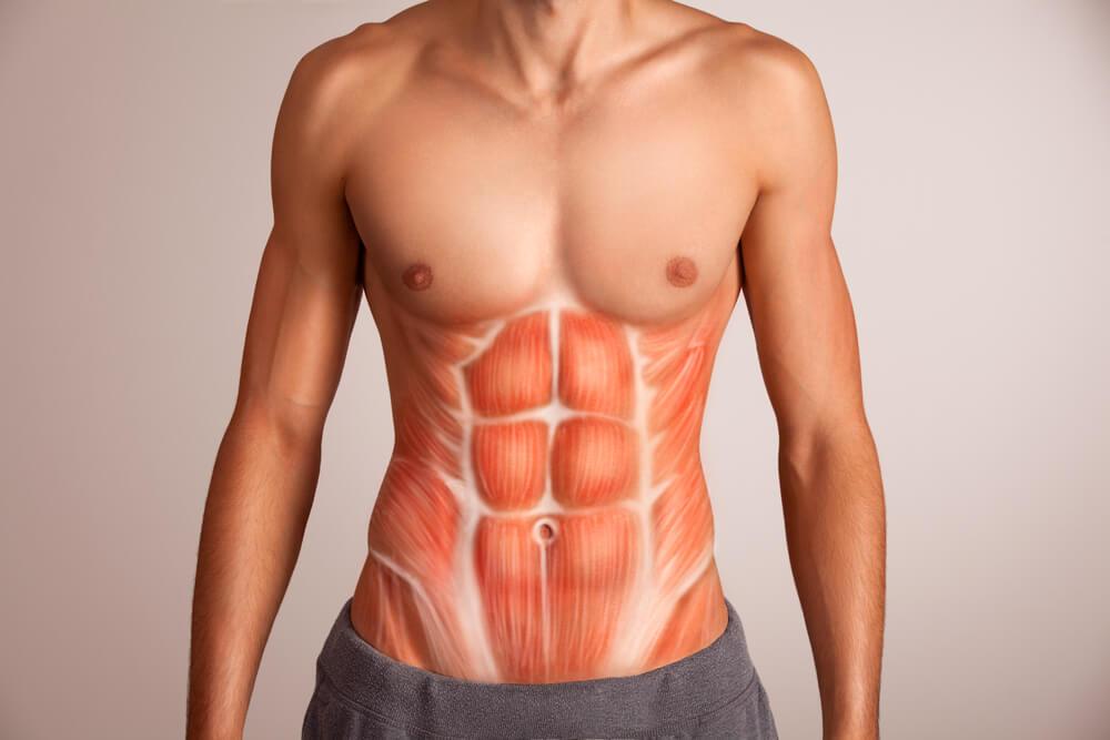 筋肉の成長のメカニズム