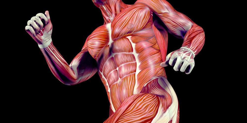筋肉が大きく強くなる理由