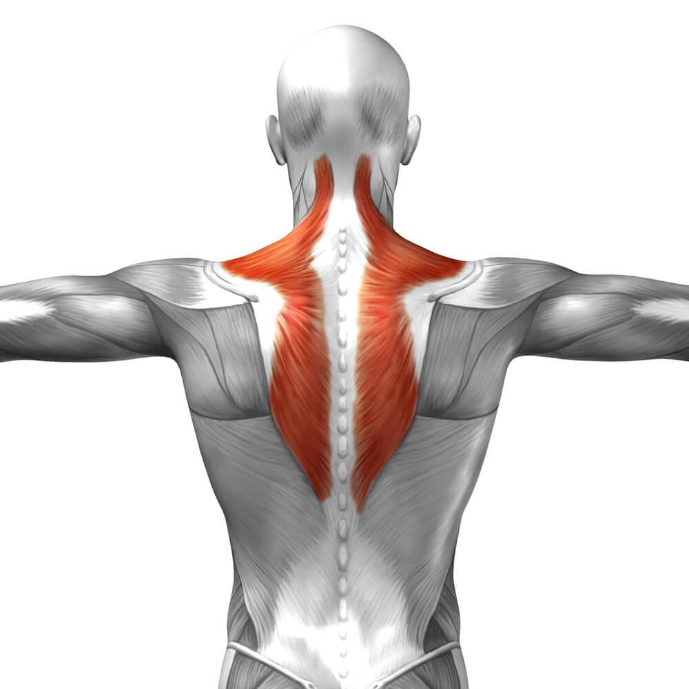 筋肉をほぐす事の重要性