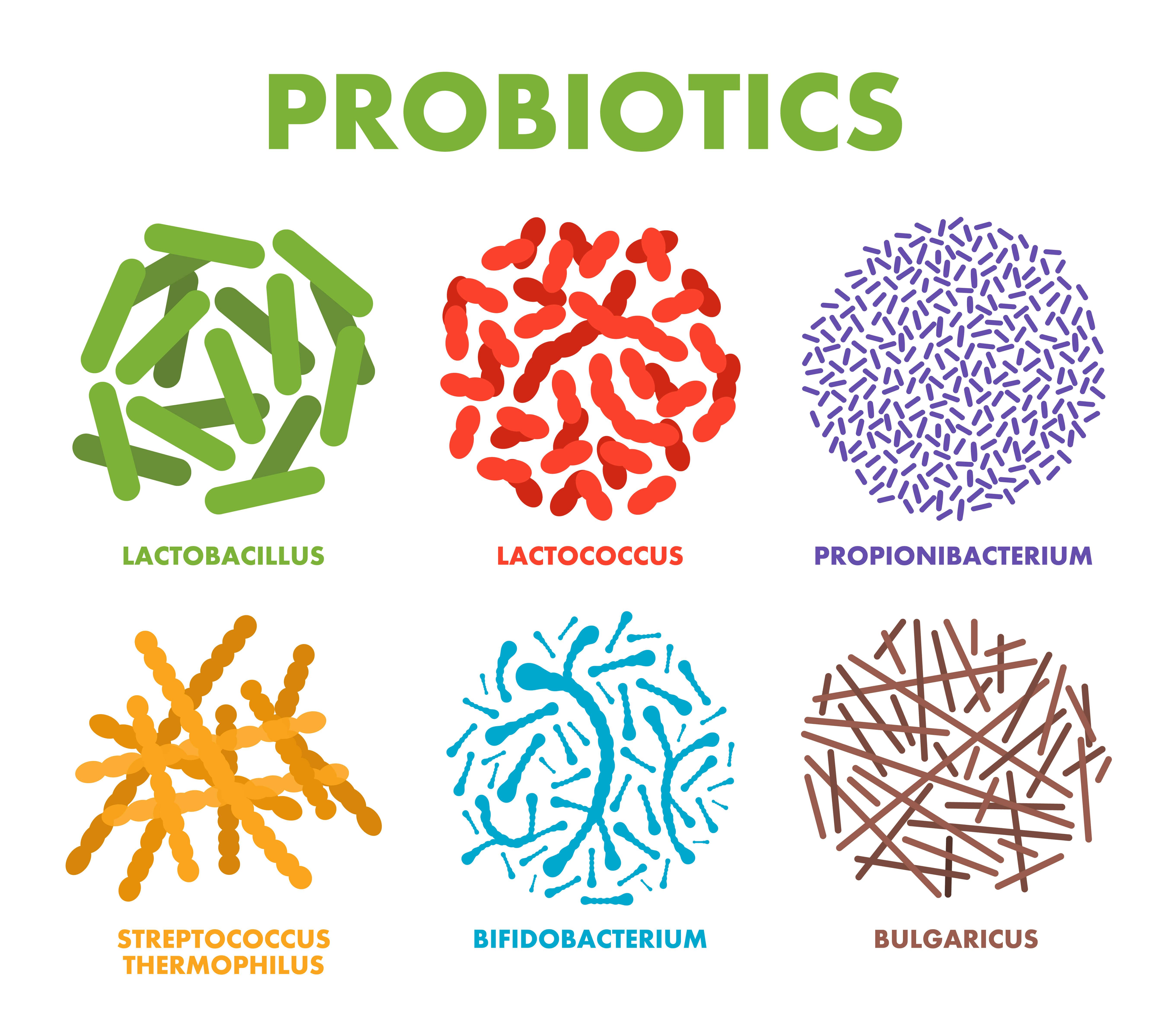 もぎたて生スムージーの乳酸菌の数に驚愕